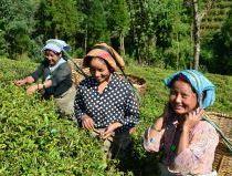 フェアトレード紅茶生産者(スリランカ)