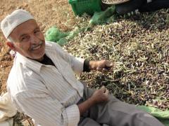 フェアトレードオリーブ生産者(パレスチナ)