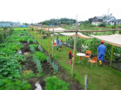 地域の人に楽しんで頂く体験型の農園です。