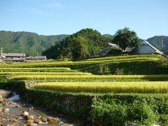 兵庫県神崎郡市川町の秋の棚田の写真