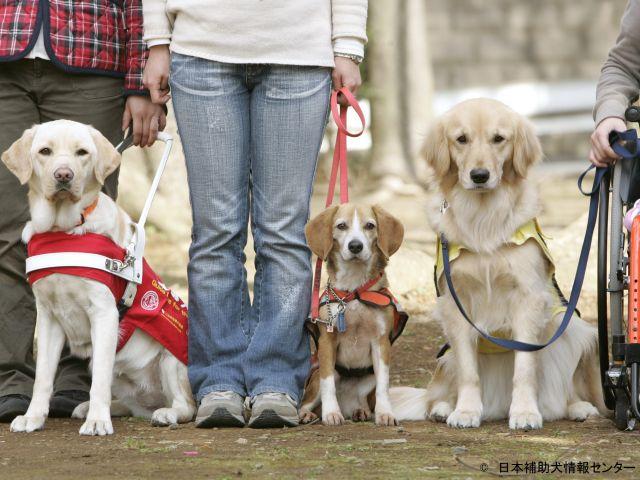 補助犬3種そろっての貴重なお写真です